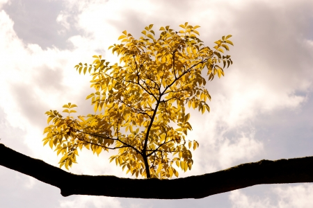 wilting:  A autumn branch against the sky