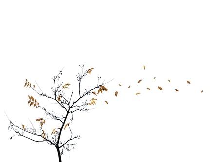 Vent arrachant les feuilles d'automne de l'arbre