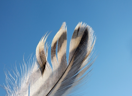 Feather of a bird against the blue sky Stock Photo - 21223370