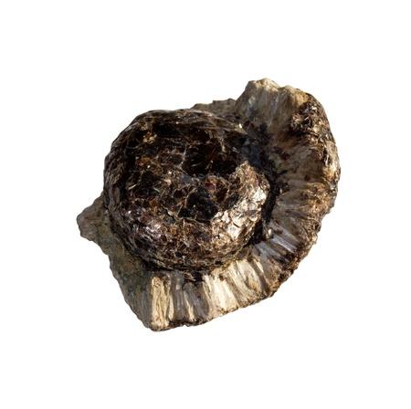 Mineral  Anthophyllite  on a white background Standard-Bild