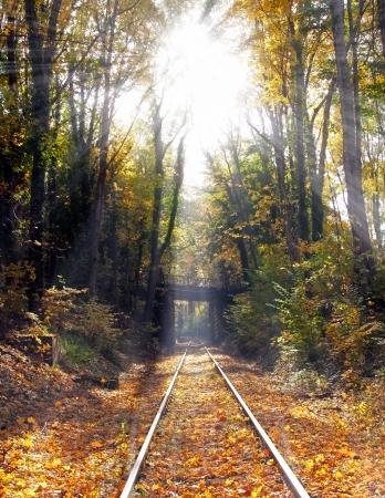 withering: Railway in the forest in the sunshine