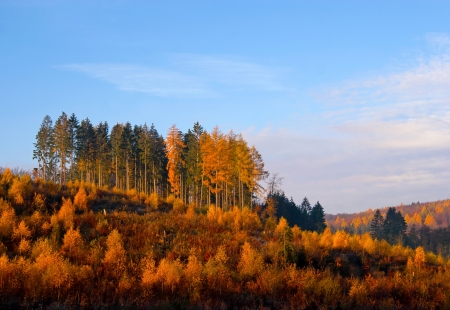 Autumn forest against the blue sky Stock Photo - 21249530