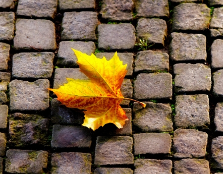 withering: Autumn leaf on the sidewalk