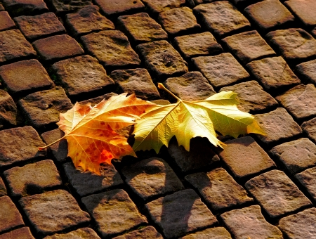 Autumn leaves on the pavement Stock Photo - 21249626