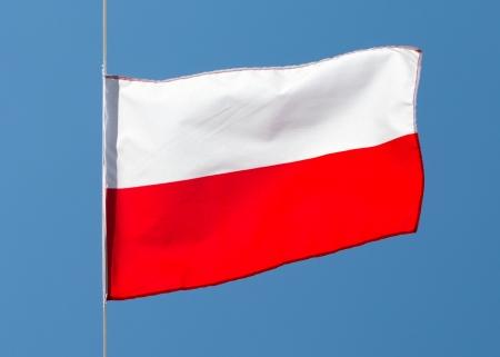 polish flag: Polish flag in the wind against the sky