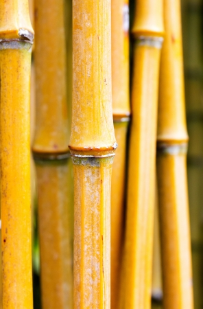 Bamboo stems in the forest Stock Photo - 21918208