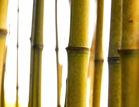Bamboo stems on a white background Stock Photo - 21918215