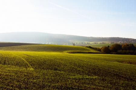 arable land: Arable land in the morning sunlight Stock Photo