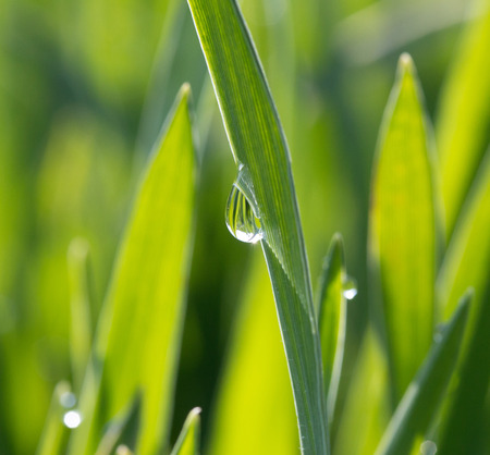 dewdrop: A dewdrop on green grass in the sunshine Stock Photo