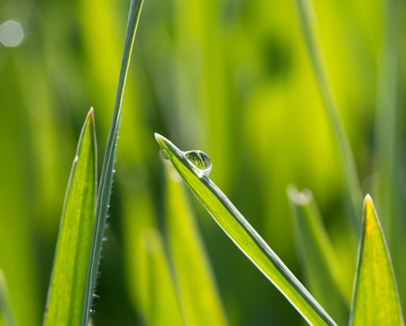 dewdrop: A dewdrop on green grass in sunlight Stock Photo