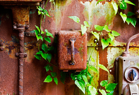 electrical panel: Old electrical panel on a iron wall and leaves of ivy