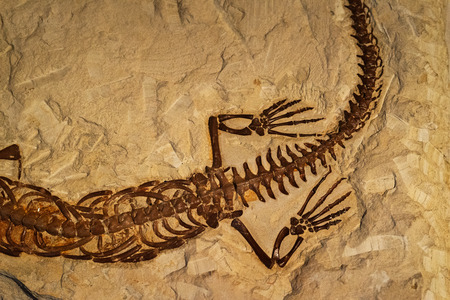 Fossil of ancient reptile in the rock 版權商用圖片