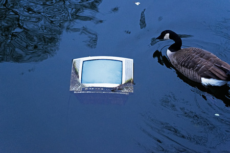 televisor: Old TV in the pond water and floating goose Stock Photo