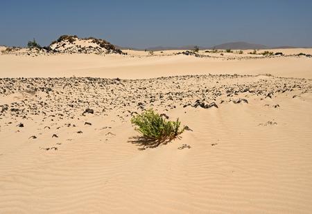 fuerteventura: Desert of Fuerteventura in the area Corallejo