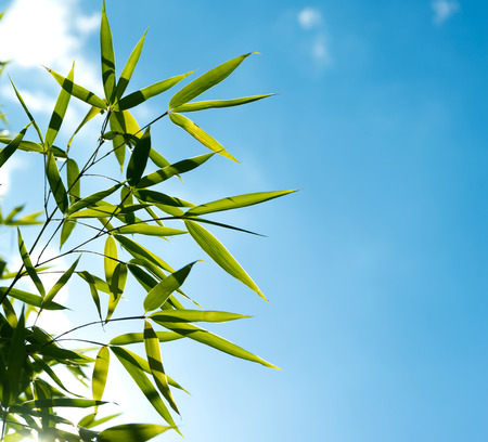 sprout growth: The branch of bamboo against the sky in the sunlight
