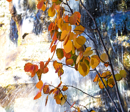 yellow trees: The Branch with autumn leaves against a waterfall