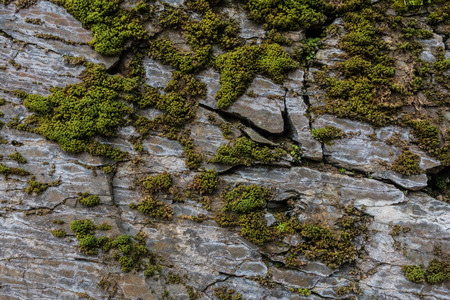 rock texture: Stone wall of rock with cracks