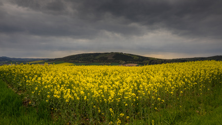 The colza fields of Lower Saxony , in Germany