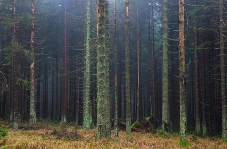 The old and autumn forest in Harz, Germany.