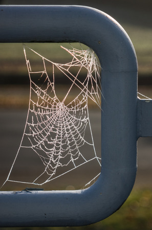 The spiderweb and frost in a sunlight.