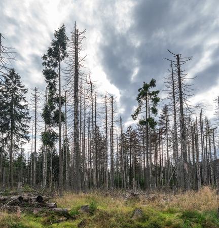 Die Landschaft des Waldes in Harz, Deutschland. Standard-Bild - 88982415