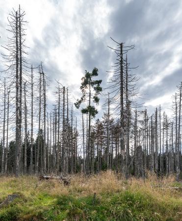 Die Landschaft des Waldes in Harz, Deutschland. Standard-Bild - 88982390