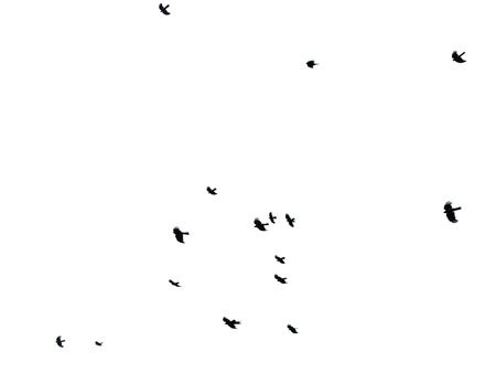 Flock of birds on white background, isolated  Banque d'images