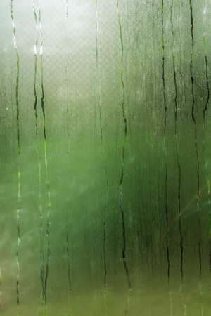 The  misted and wet glass of a greenhause .