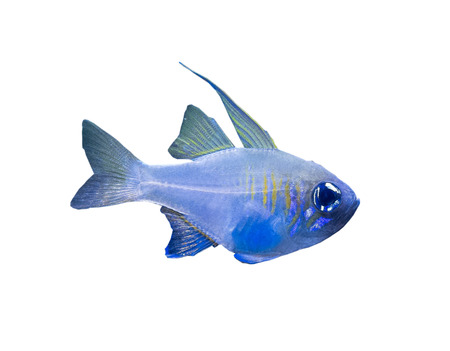 The coral reef fish on white background, isolated .