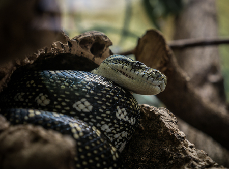 asp: The snake on a branch in zoological garden .