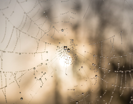The dewdrops on a spiderweb at morning .