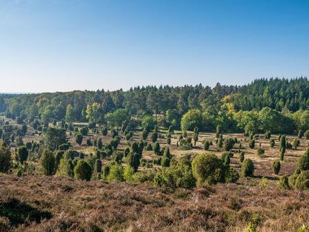Landscape of Lueneburg Heath in sunlight, Germany .
