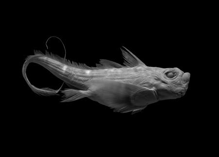 fish on black background, isolated .