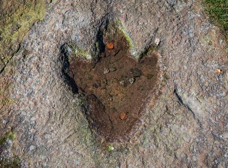 The footprint of dinosaur on a rock . Reklamní fotografie - 117911736