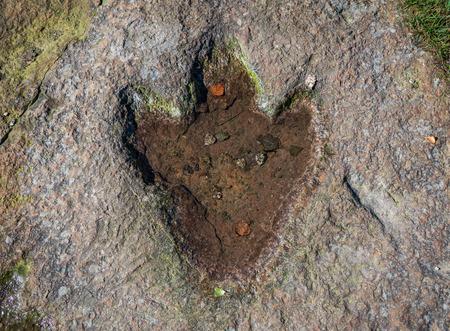 The footprint of dinosaur on a rock .