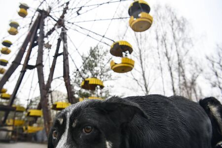Dog in Abandoned amusement park in ghost town Prypiat in Chornobyl exclusion zone. Ukraine
