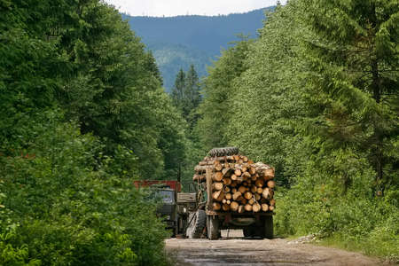 A timber truck carries timber in the Carpathian Mountains, Ukraine. Deforestation in Ukraine.