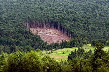 Cut down forest in the Carpathian Mountains, Ukraine. Deforestation in Ukraine.