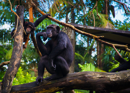 brigt: Mummy ape with a kid. The Thinker
