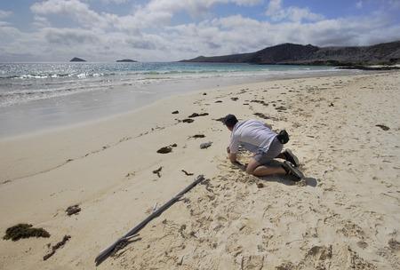 해변, 푼타 마우, Floreana, 갈라파고스 제도에서 촬영하는 남자