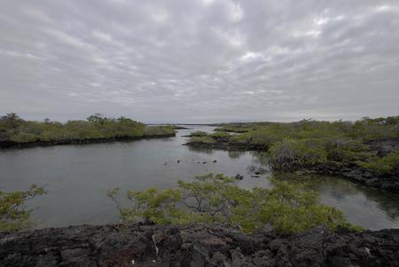 베이 풍경, 푼 타 모레노, 이사벨라 섬, 갈라파고스 제도, 에콰도르