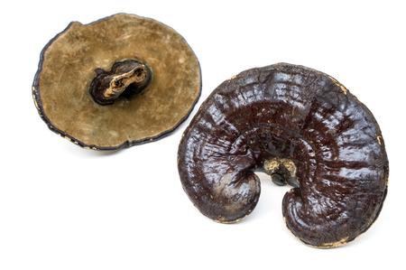 medicina tradicional china: Tradicional China Ganoderma lucidum medicina