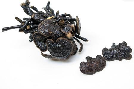 Traditional Chinese Medicine: Traditional Chinese medicine Ganoderma lucidum Stock Photo