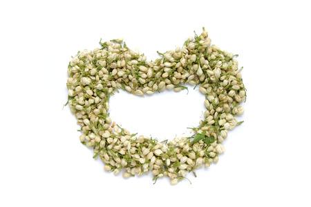 herbaceous: Jasmine Flower