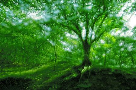 Anhui city of Suzhou province huangcangyu national Forest Park Stock Photo