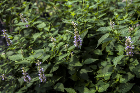Chinese herbal medicine. 版權商用圖片