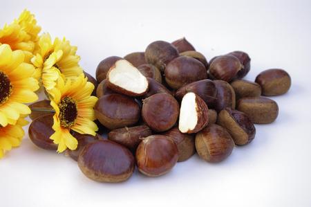 fagaceae: chestnut Stock Photo