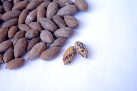 Chinese torreya nut