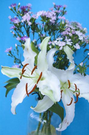 Weiße Gerbera König Louie Blumen Bauernhof Baguio Lizenzfreie Fotos ...