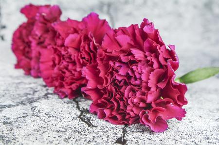 Carnation flower Stock Photo